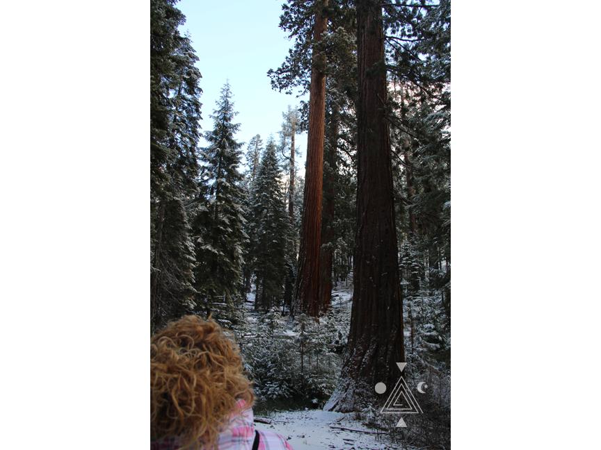 An* en Yosemite Park